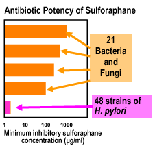 antibiotic potency sulforaphane