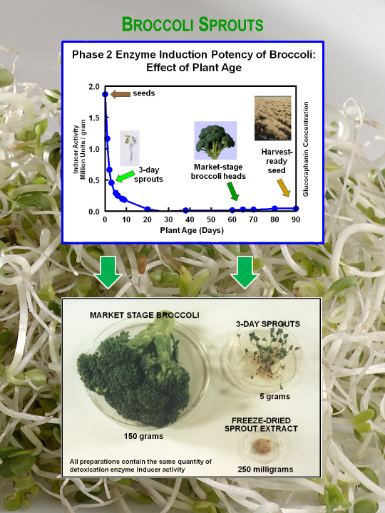 broccoli sprout potency chart