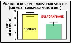 gastric tumors per mouse