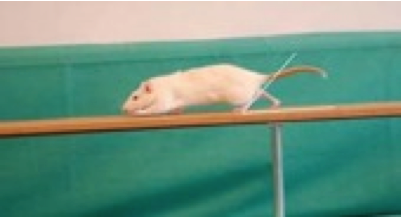mouse ladder test