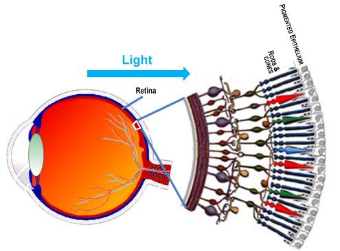 retina oxidative stress