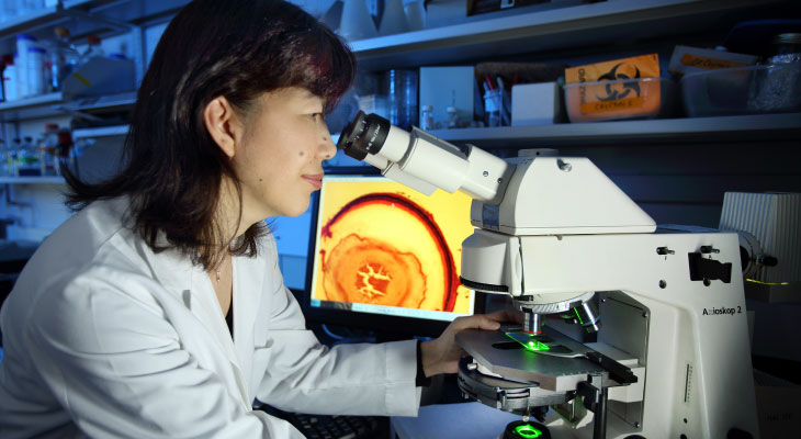 chemoprotection-research-using-microscope